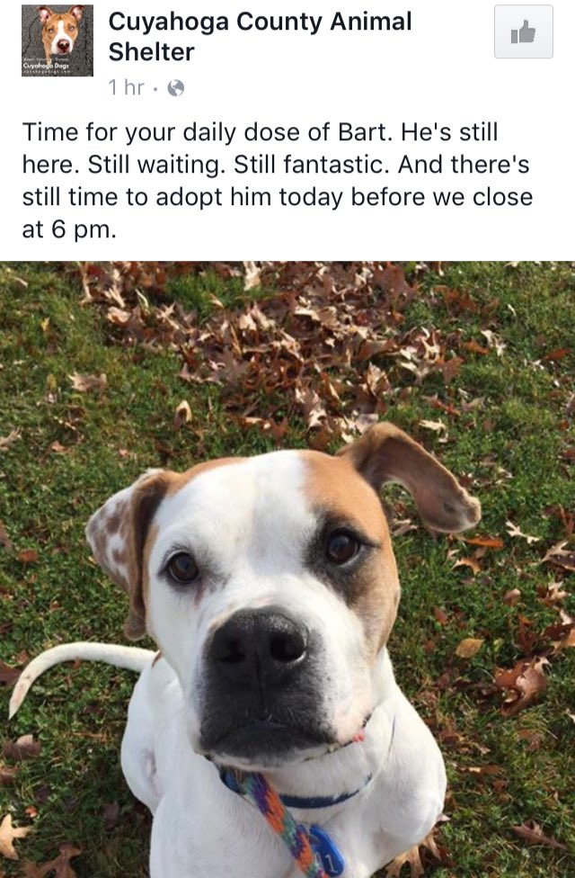 #Cleveland Bart is still looking for his forever home. Let's get this cutie adopted—please RT. #dog https://t.co/SwH6KBt9bC