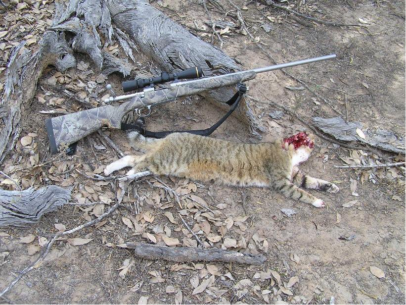 PLEASE EVERYONE REPORT @SteveLarsson @DingoResearch @CatEcology TO @PETA !!! THEY SHOOT CATS !!!   RT PLEASE !!! https://t.co/bthVXbyoo0
