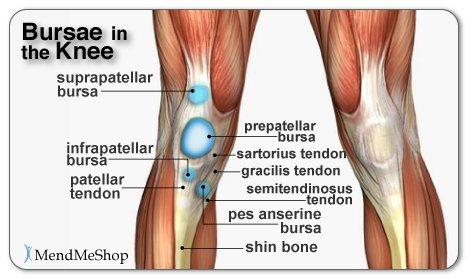Mendmeshop on twitter anatomy bursae sacs of the knee httpst 1211 pm 9 jan 2016 ccuart Gallery