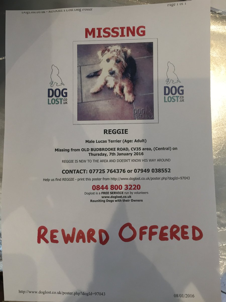 LOST DOG. Please help find Reggie a Male Lucas Terrier lost in #Warwick   ***Please Retweet*** #LostDog https://t.co/2v0tK5SZMy