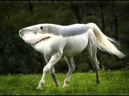 D-Horseと調べようと思ったんだけど、間違えてS-Horseで検索したら出てきたこいつをどうしたら良いんだろう pic.twitter.com/rK2PtJzFO0