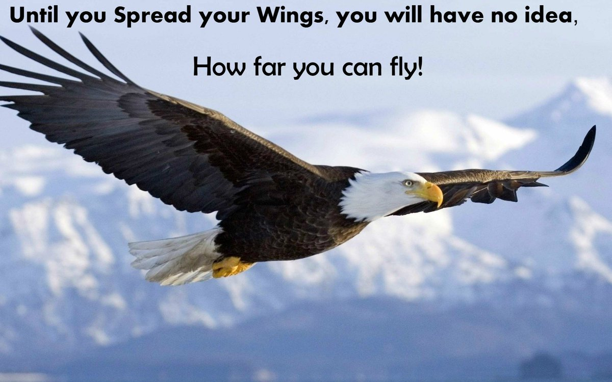 "Brigette Hyacinth on Twitter: ""Until you spread your wings, you ..."