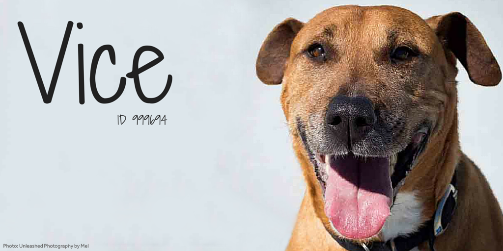 Vice is full of enthusiasm! He likes to interact with everyone & is curious about everything. #AdoptASenior https://t.co/NScqortOZf
