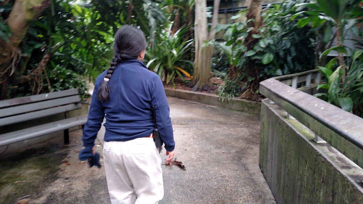 Llizo walking around @topekazoo rainforest. A lot of her job is walking around the zoo checking for abnormalities https://t.co/Fzc5I3Jb9h