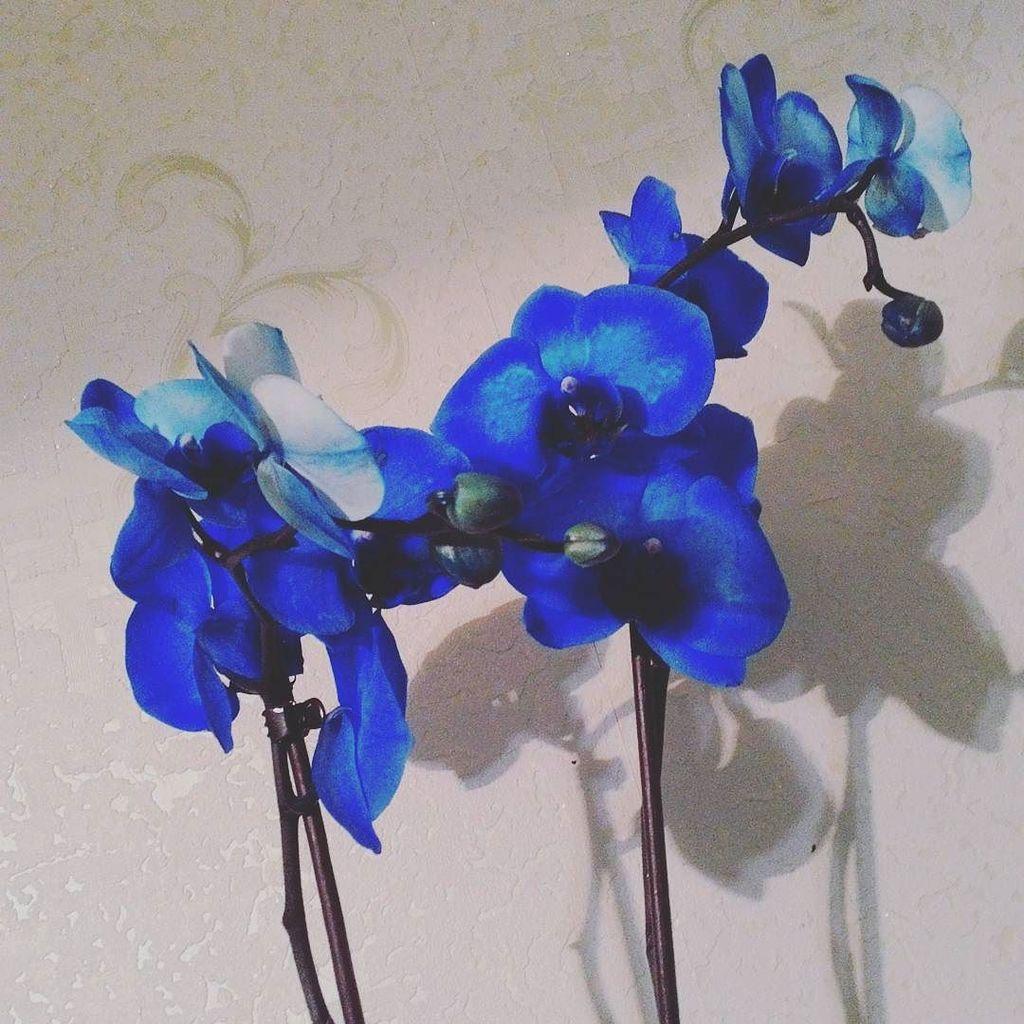 Emi Orhidea nude 307
