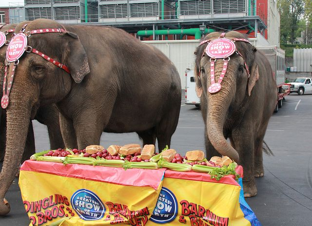 Leading US circus calls time on performing elephants