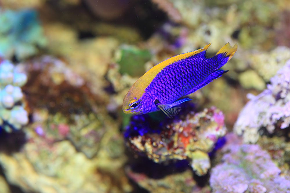 Pisces reef piscesreef1 twitter for Jans tropical fish