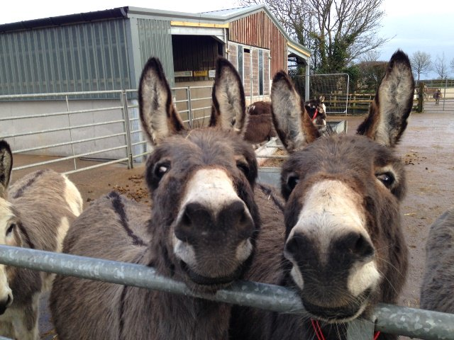 Good Morning everybody, hope this pretty pair get your Tuesday off to a smiley start :D  #CharityTuesday https://t.co/dVouGaWEF6