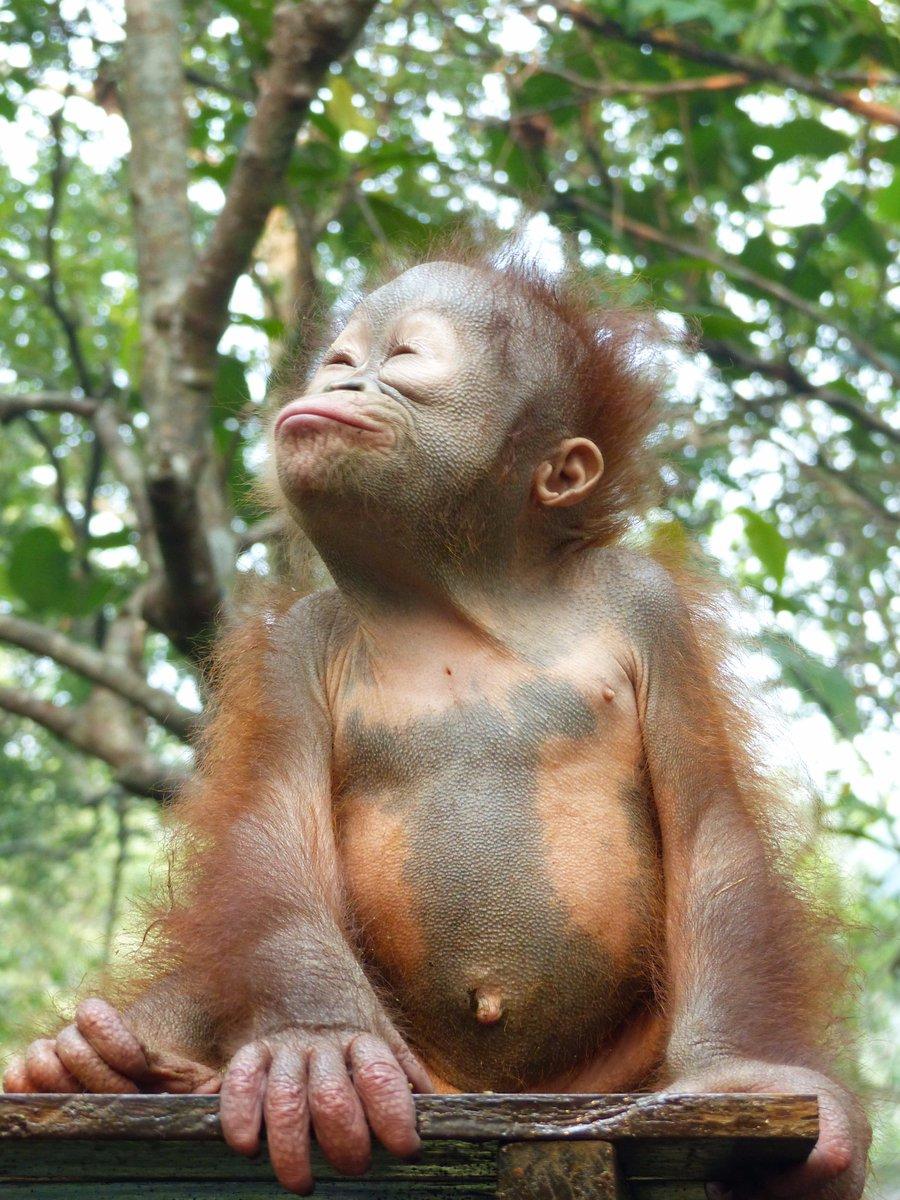 Happy International 'Kiss a Ginger' Day from Asoka! #KissAGingerDay https://t.co/tewAD4oaku