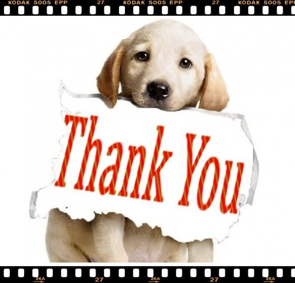 """Pets Alive on Twitter: """"A big Thank You to Walden Humane ..."""