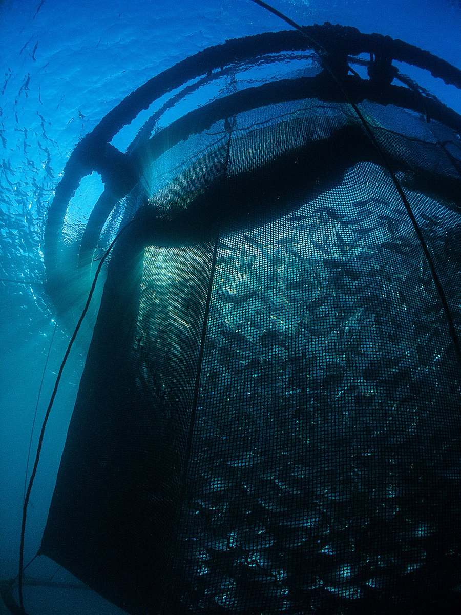 New q a what does offshore aquaculture mean for the for What does sustainable fish mean