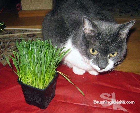 Psst … who's got grass? #blogpawschat https://t.co/BWZ8OOOLXg