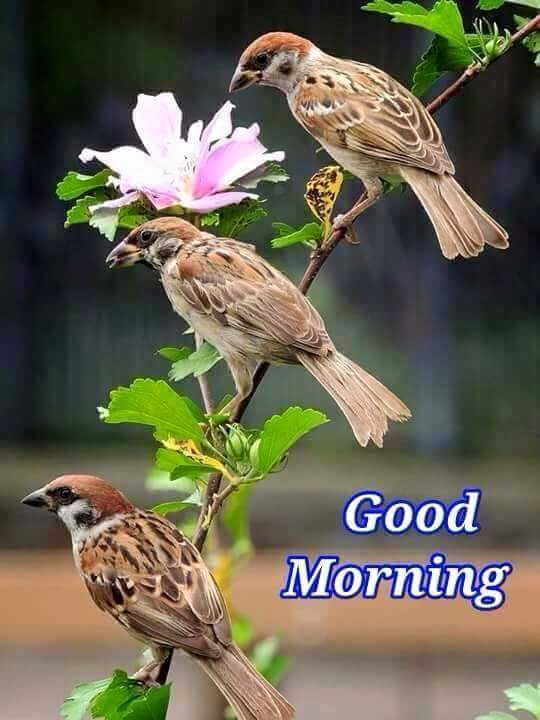 Good Morning Jan : Vijay kumar on twitter quot good morning friends have a nice