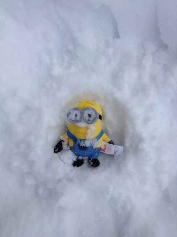 альбиносами могут картинки миньоны в снегу лучше