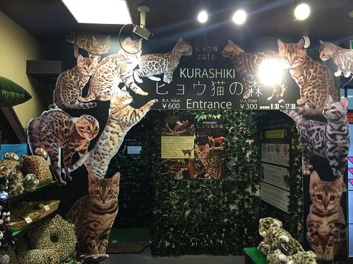 原宿の猫カフェ、ヒョウ猫の森に行ってきたので徹 …