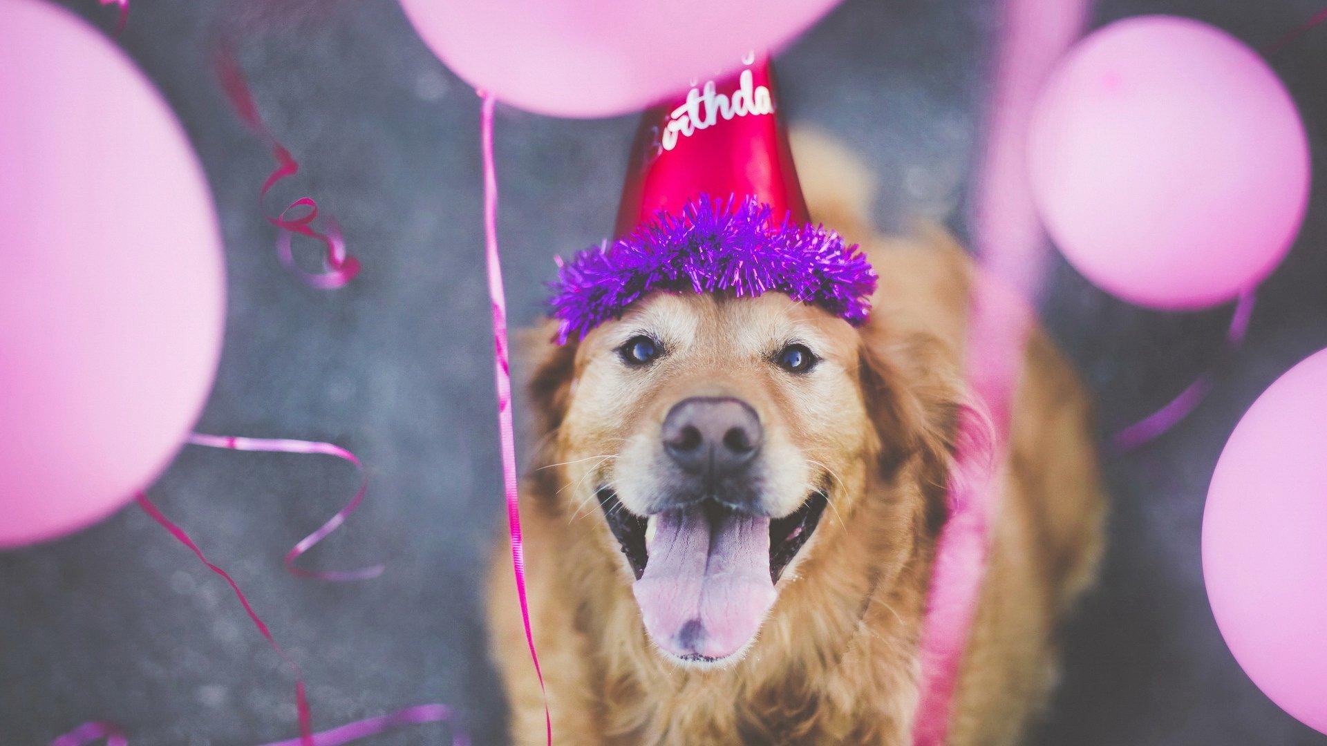 День учителя, поздравления с днем рождения с животными картинки
