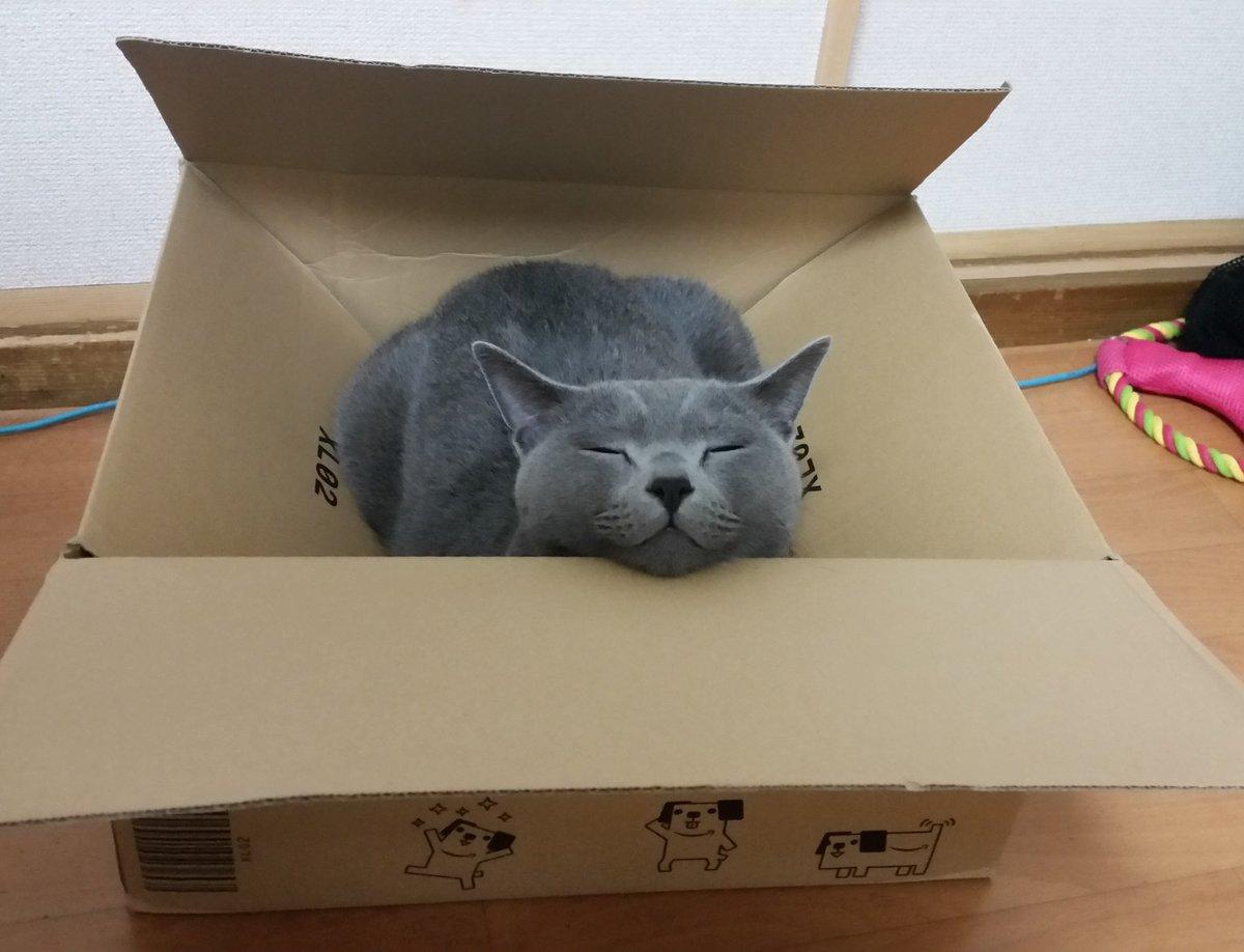 箱の中で寝たいけど、箱と体の大きさが合っていない為、仕方なくアゴを箱のふちに置いて睡眠している妖怪発見 pic.twitter.com/EIUYUGCmg7