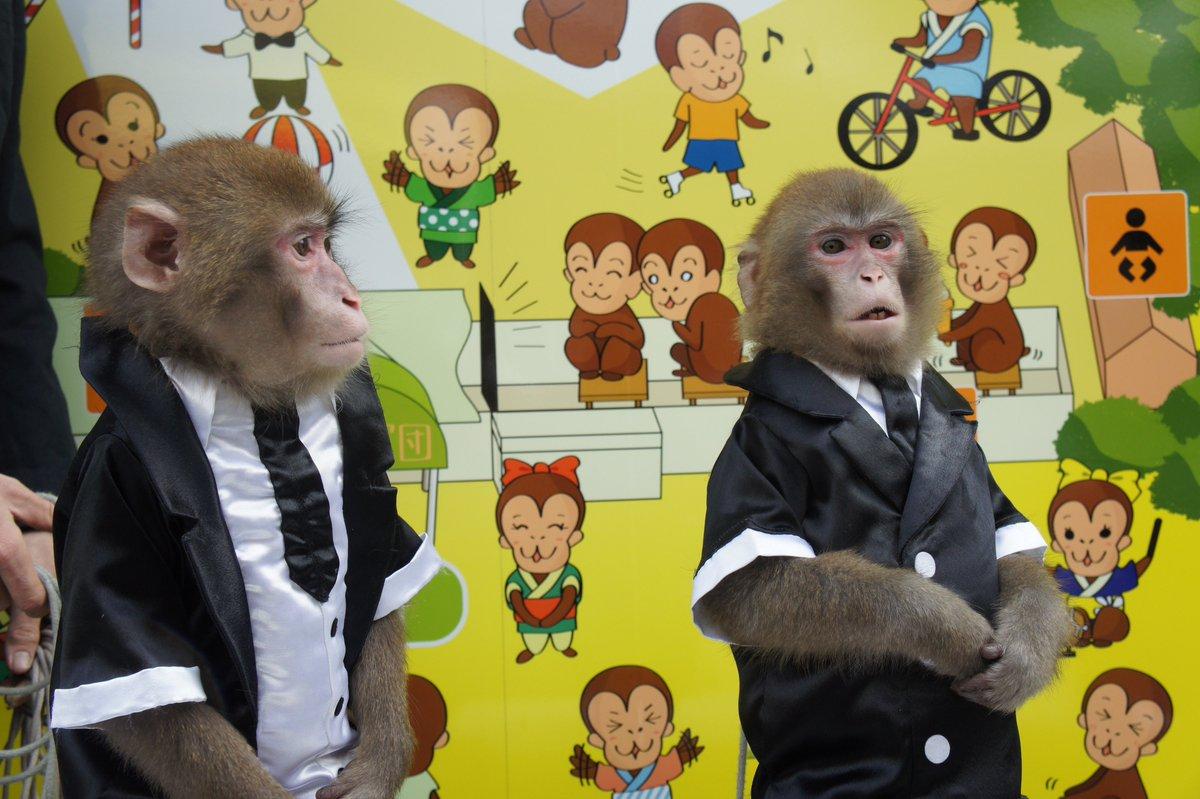 日光 猿 軍団