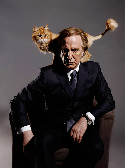 This image of the great Alan Rickman and a cat should break the internet. Twitter, do your magic.