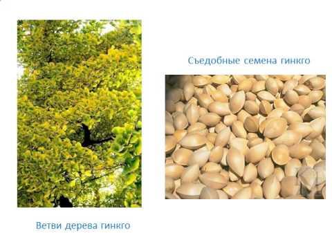 Презентация растения полей