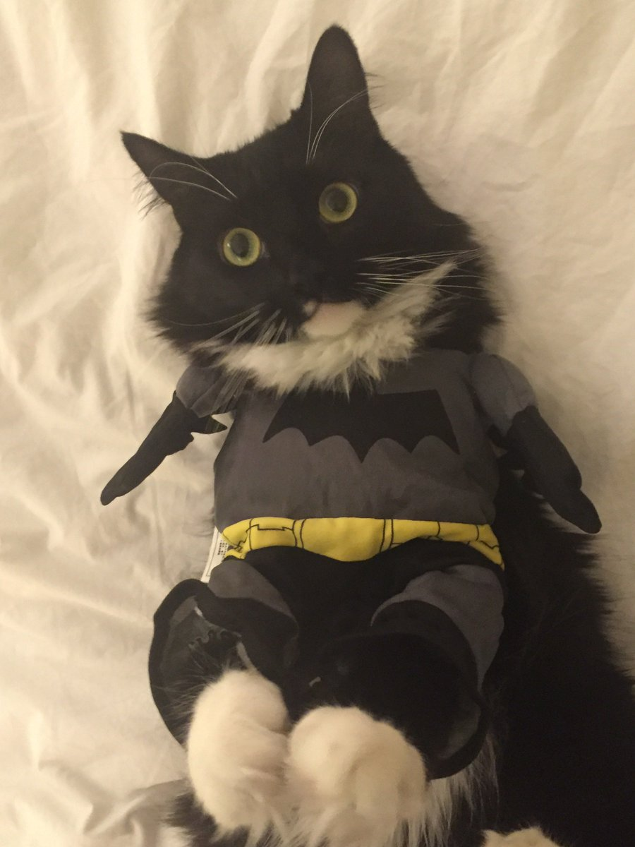 #Batcat. Hit u201cpawsu201d and celebrate #DressUpYourPetDay. Show us your pet in costume and & Batcat: Latest news Breaking headlines and Top stories photos ...