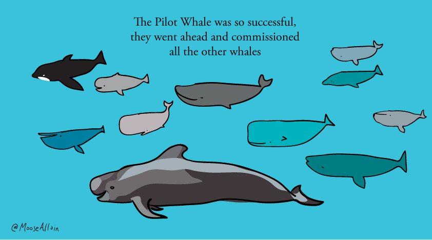 Pilot Whale https://t.co/R9e8f9ErTW