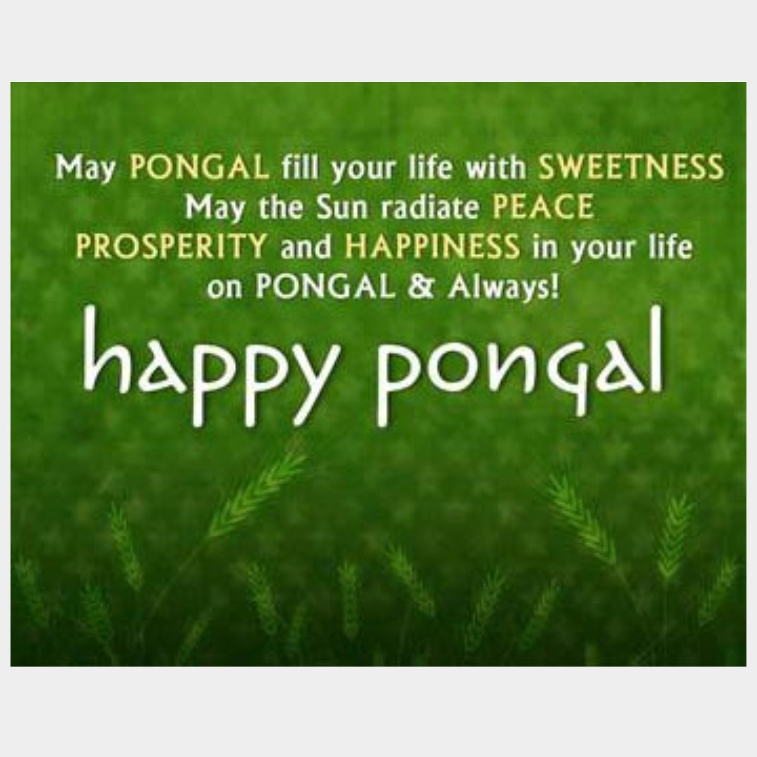 Happy Pongal : Greeting Cards