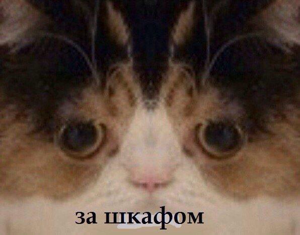 затем картинка кот это новый продукт
