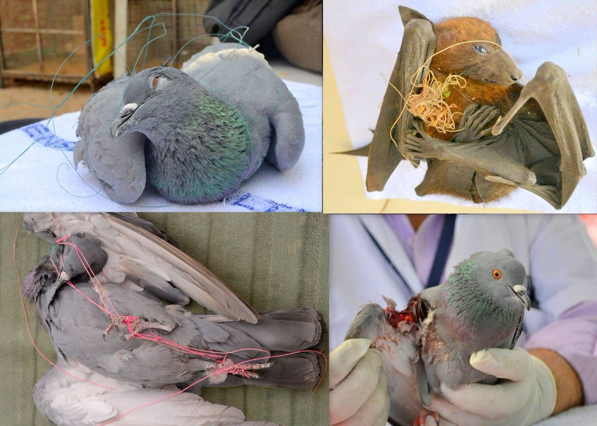 Campaign 'Karuna' to help injured birds and animals during