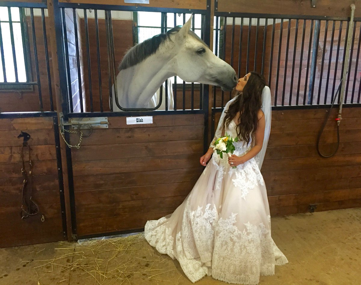 Scott Yancey On Twitter Here S Beautiful Sarah Before Her Wedding Loves Animals Just Like Us Pei Equine Https T Co Hqgbvcme0s