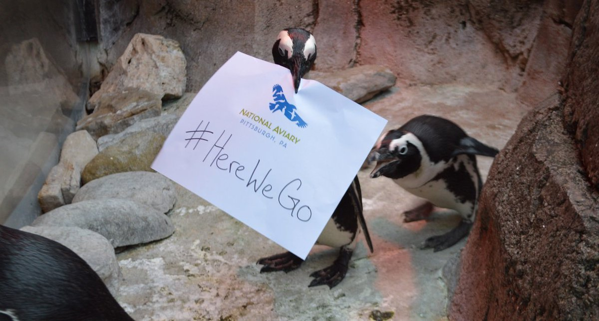 #HereWeGo Go get 'em @steelers from every-bird-y at the National Aviary! https://t.co/ipoDS3bJcf