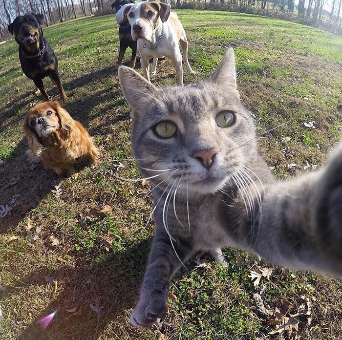 猫が自撮りしてるように見えるシリーズ良いですね。 pic.twitter.com/9idaq688Fe