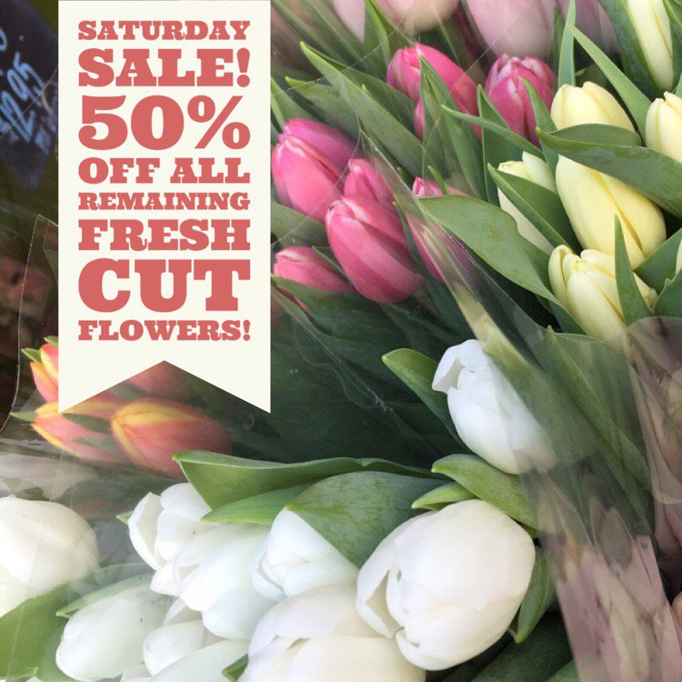 """Rubia Flower Market on Twitter: """"☀️Saturday Sale! 50% Off All Flowers! 💐 — Today only! New flowers arrive a day early nex... https://t.co/gFmSaIGZYS ..."""