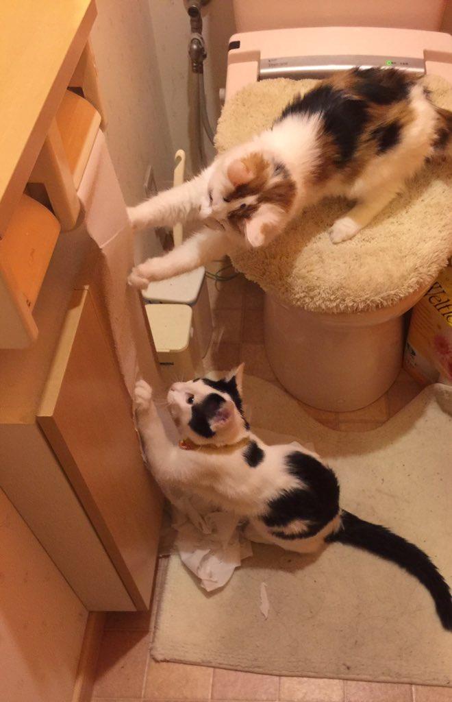 トイレから物音がすると思ったら、めっちゃ楽しそうな猫ズ・・・でもやめて https://t.co/chScAMT6Kx
