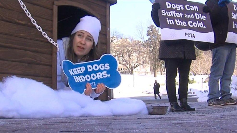 PETA defends pets left in the cold https://t.co/nq0jjGlah7