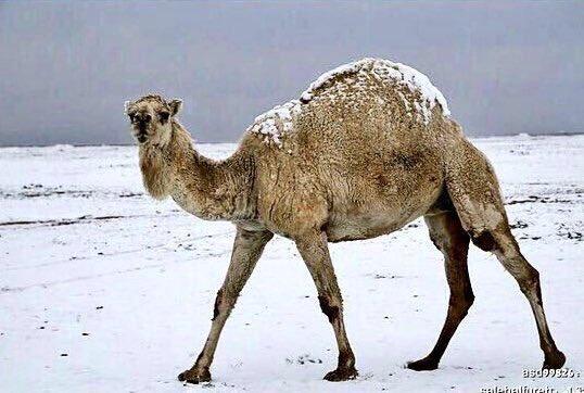 Neve nel Deserto del Kuwait, prima volta nella storia [Foto e Video]