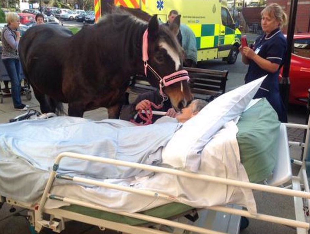 Ask people what matter to them, example of horse visiting owner in hospital  #palliativecarescot #personcentredcare https://t.co/7Kzo7LswAu