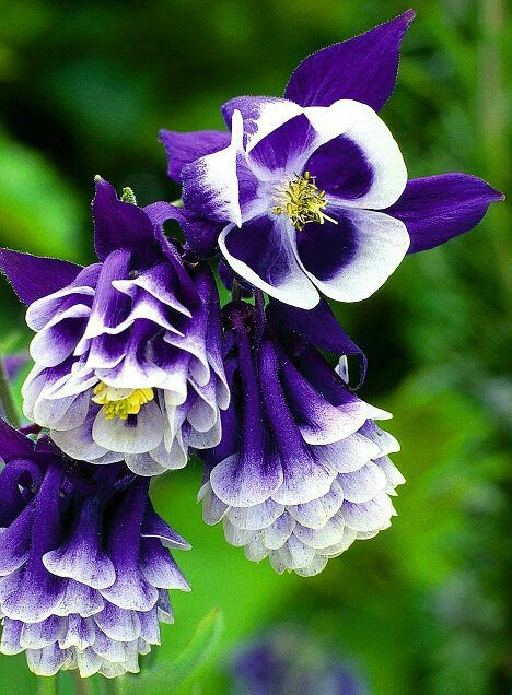 World Love Flowers On Twitter Lovely Flower And Nice Color Thank You For Sharing Rt Mahirsaka Flowering Fl Bouquet