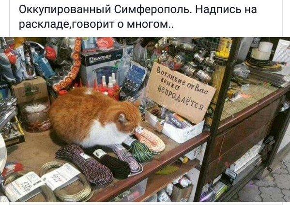 В Севастополе призывают жителей протестовать против несправедливой подачи электричества - Цензор.НЕТ 6239