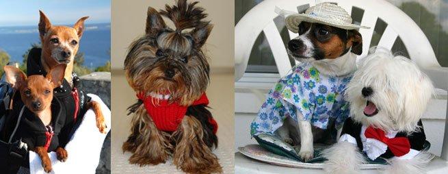 Одежда для кошек схемы для вязания