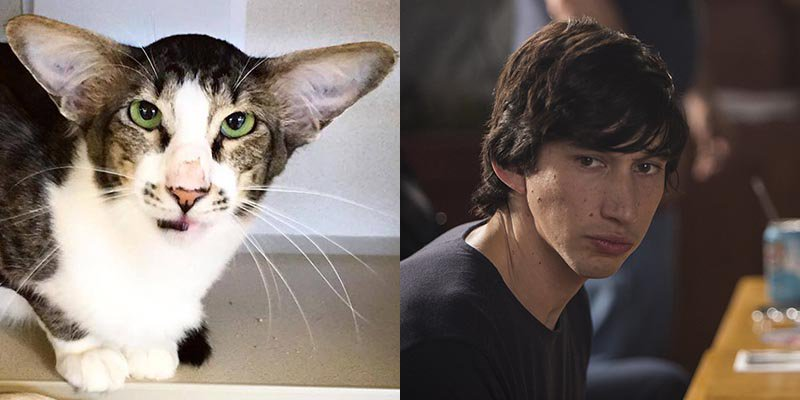 For Your Consideration: A Cat That Looks Like Adam Driver https://t.co/055rcR56ch https://t.co/2X9SPJ2MWr
