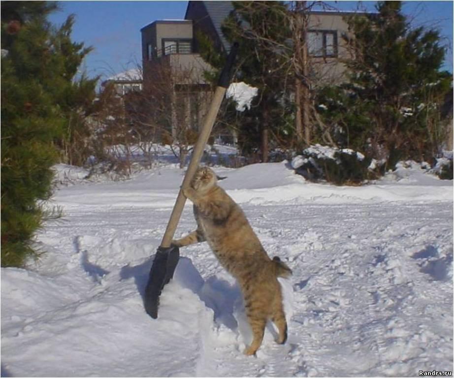 Смешные картинки с зимой с надписями