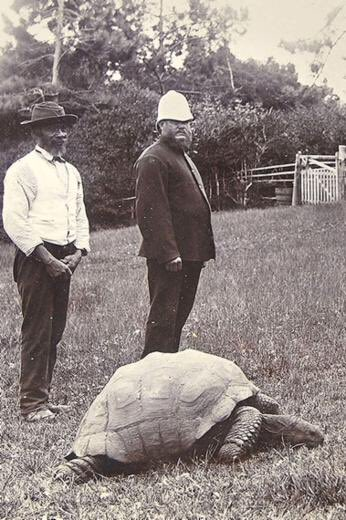 This is the same tortoise. It's 183 years old. The bw photo is circa 1902. The colour is last year. @bbc5live next https://t.co/9OXu4MJU7y