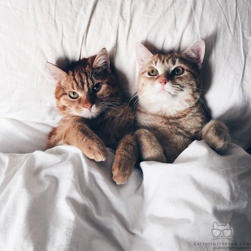 Resultado de imagem para TUMBLR CAT