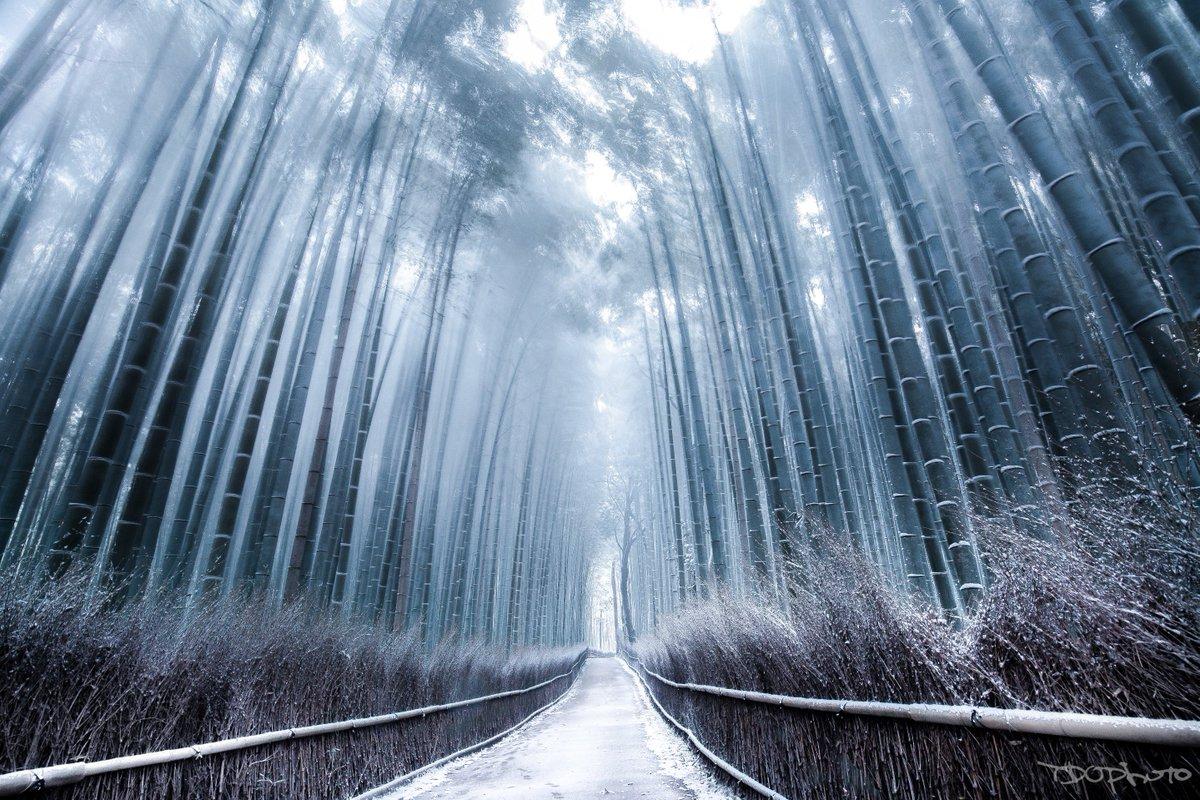 早朝から嵐山へ行ってきた。雪の竹林はすごく綺麗だった!!京都は素晴らしい所だ。おいでやす京都。 pic.twitter.com/ZsLkv7tA3p