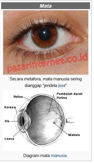 Bagian- bagian mata