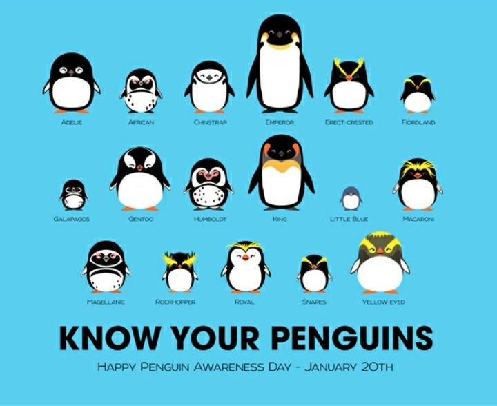 Today January 20 is The Penguins Awareness Day 🐧🐧🐧 @WWF @Animals1st @_AnimalAdvocate @lettheanimalive