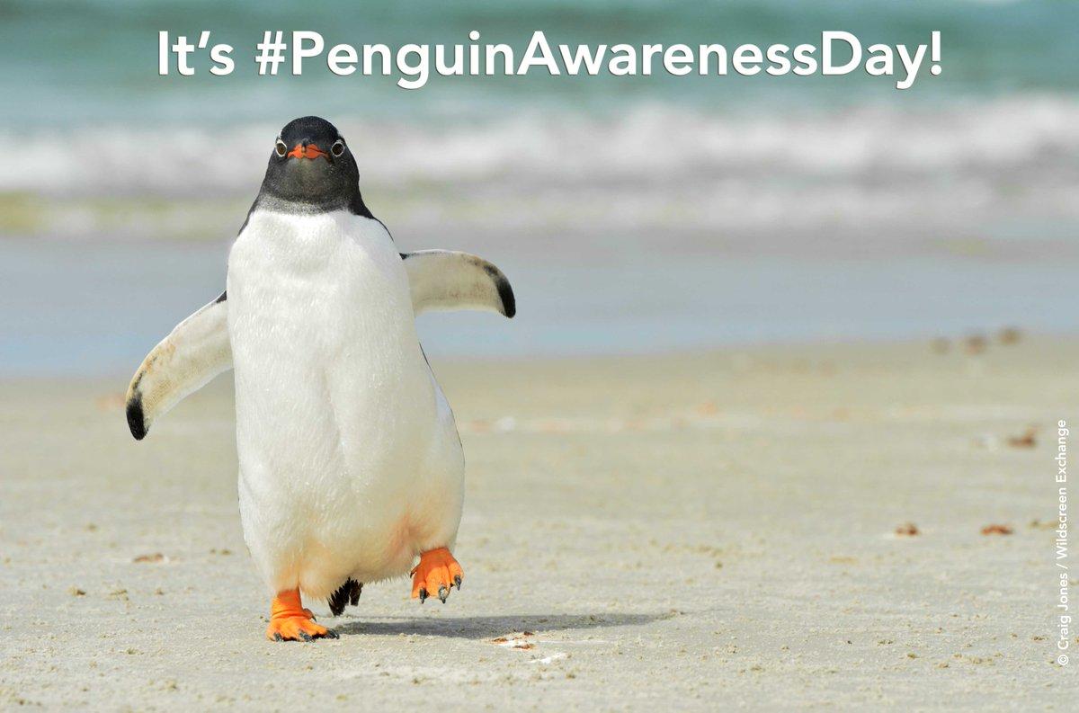It's #PenguinAwarenessDay! Share your love for them today! Pls RT. https://t.co/kLSZsysg6V #lovespecies https://t.co/GW26krJmCH