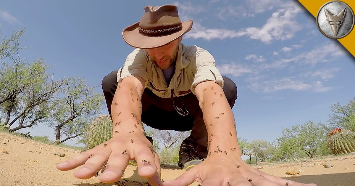Harvester Ants COYOTE PETERSON on Twi...