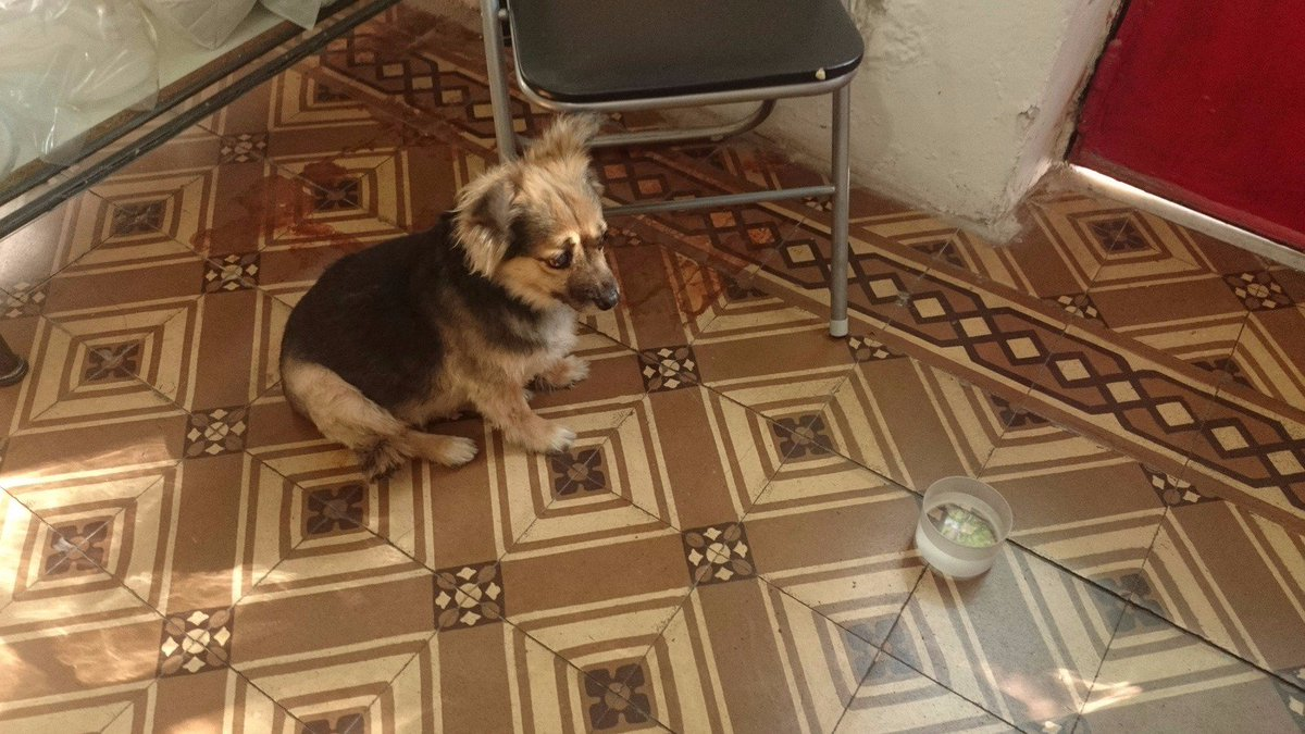 X favor Rt encontrada en Gaona y Espinosa. Collar rojo, muy educada y mansa. At Caballito, Paternal y Villa Crespo. https://t.co/Q5qnJI4LIz